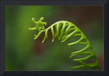 Delicate Fern Frond Spiral