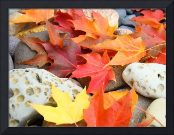 AUTUMN LEAVES Fall Art Ocean Beach Fossil Rocks