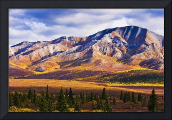 Fall Colours And Fang Mountain, Denali National Pa