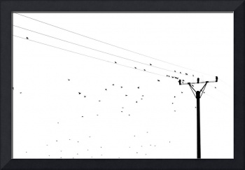 Birds flying away from the eletric wire