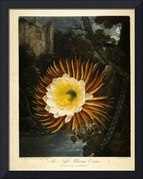 Night Blooming Cereus Temple of Flora Thornton