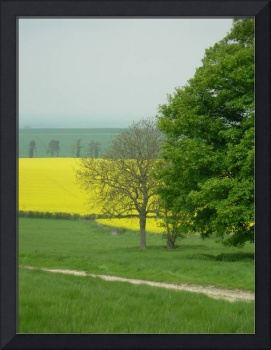 Yellow field 1