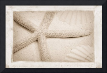 Starfish and shells in the sand