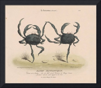 Vintage Illustration of Dancing Crabs (1849)