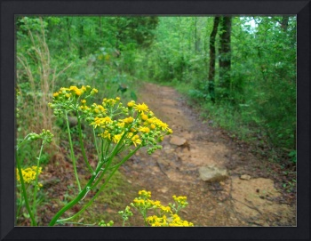 Flowers on the Path #2