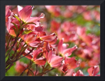Beautiful Pink Dogwood Tree Flowers art