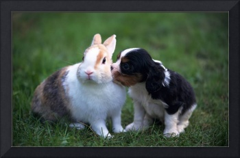 Adorable Bunny Rabbit and Puppy