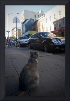 Intellectual NYC Cat