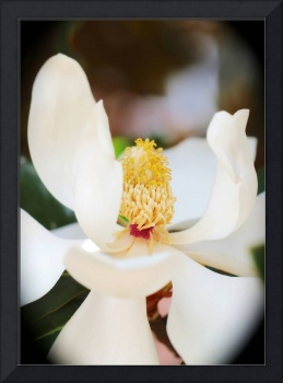 Sweet Magnolia Center with Vignette