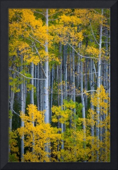 Colorado Fall Color