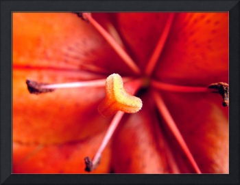 Red Day Lily 87a