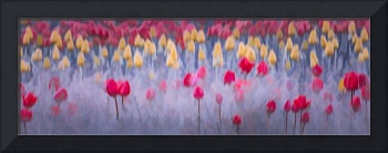 Field of Dancing Tulips