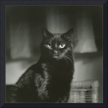 Portrait of black cat square