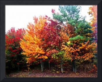 Fall Foliage in Tennesse