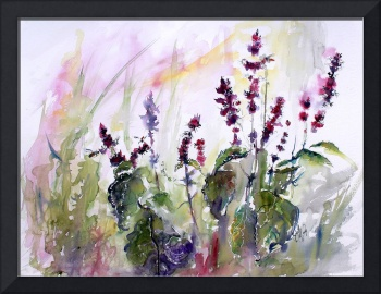 Basil Flowers Culinary Herbs Watercolor
