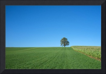 Beautiful lonely tree on the hill under a clear bl