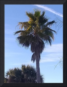 Florida Coast Palm And Contrail