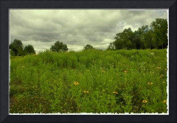Gettysburg Landscape With Yellow Flowers