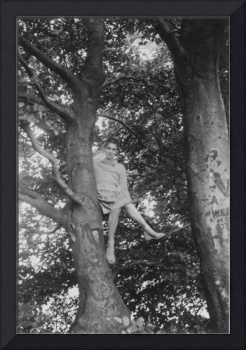 Self up the big beech tree, Bishop's Castle
