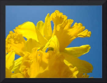 Daffodils Flowers Art Prints Spring Floral Canvas
