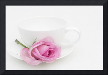 Pink Rose with a White Teacup and Saucer