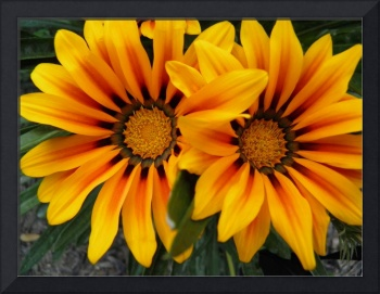 yellow and orange flower 2