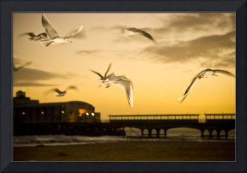 Seagulls at sunset.