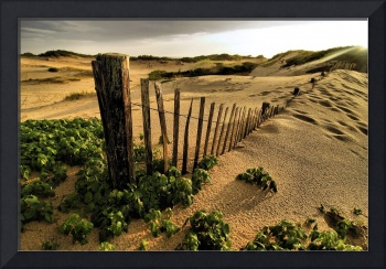 The Dunes of Provincetown