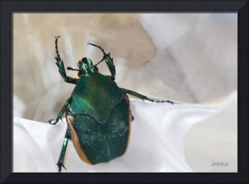 Green Beetle with Reflection Issues