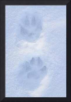 Dog Paw Tracks on Snow