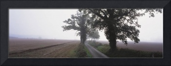 Small country road w/ trees in early morning fog