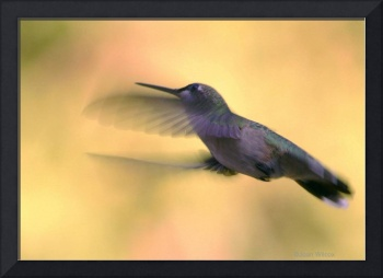 Oh Humming Bird