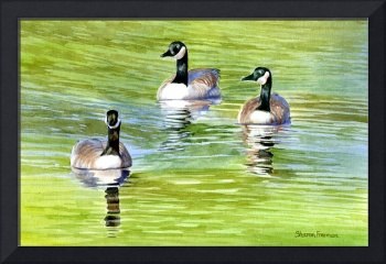 Three Canda Geese on a Pond