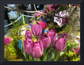 Philadelphia Flower Show March 1st 2013