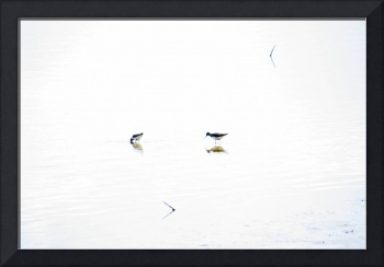 Sandpipers - Minimalistic - Enhanced