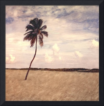 Lone Palm- Miami Beach,FL