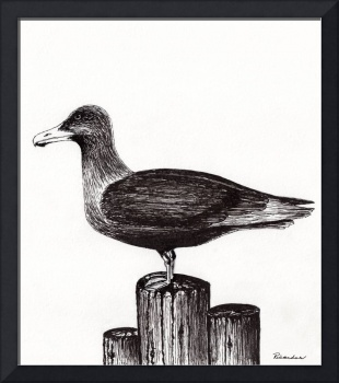 Seagull Portrait on Pier Piling E3