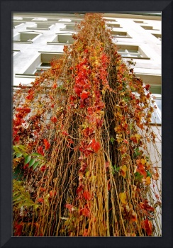 Urban Cascade: Nature Wins This Round