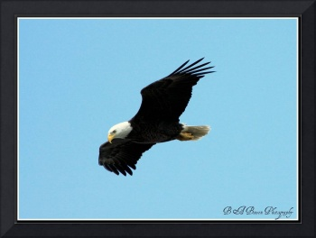 Eagle in Flight 2