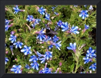 blue flowers and bumble bee