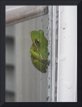 Froggy on a Rainy Day