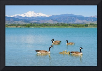 Geese and The Twin Peaks