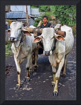 Indonesian Bovine Cart