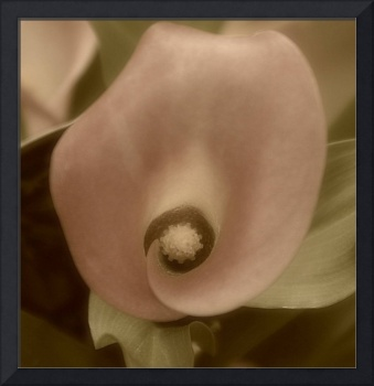 Sepia Calla Bloom