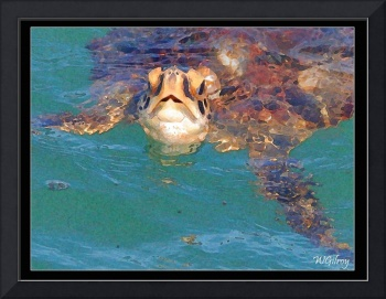 WGilroy ...Sea Turtle...