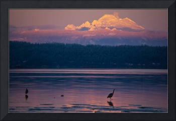 Mt. Baker and Two Herons