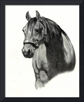 Horse: Front View