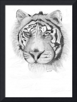 tigerpencil