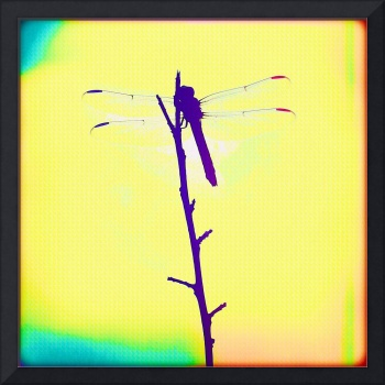 Painted Dragonfly II