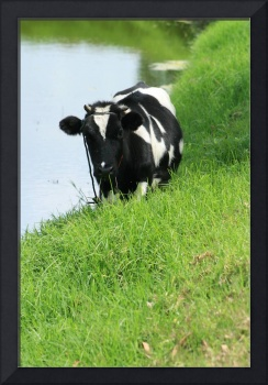 Cow Standing Beside a Lake